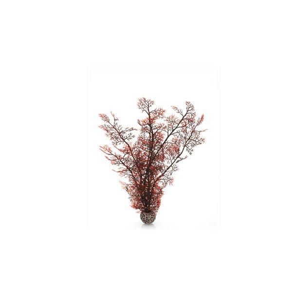 Sea Fan Crimson. Large
