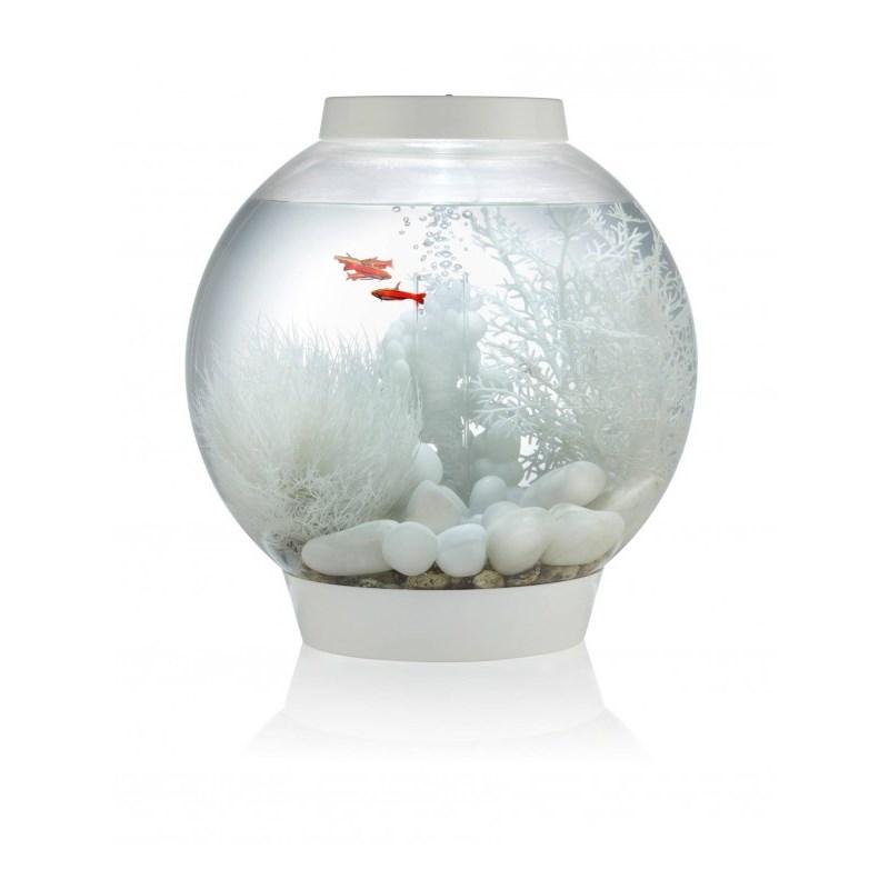 akvarie bowle