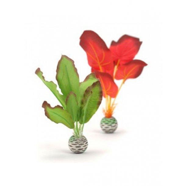 Silkeplante Grøn / Rød 2 stk. small.